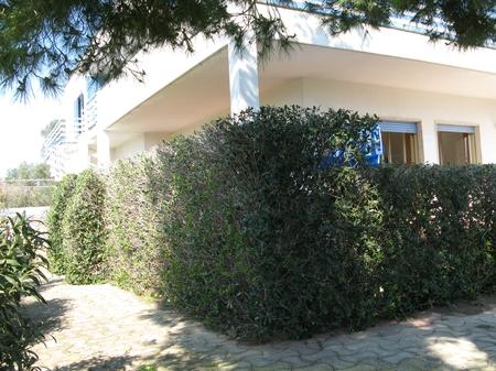 holiday homes - Porto Cesareo ( Porto Cesareo ) - Complesso Rosaria app. 2 PT