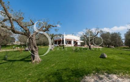 The house is surrounded by a well-kept and lush olive grove