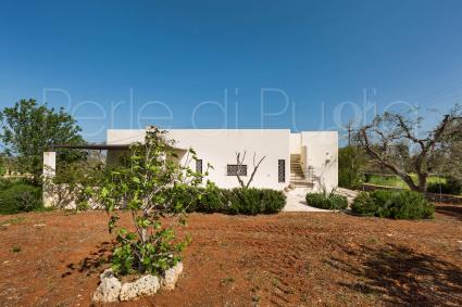 Olive trees, fruit trees and Mediterranean scrub frame the holiday home for rent